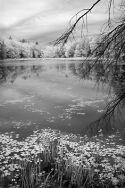 Miller Pond #1