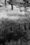 Miller Pond #2